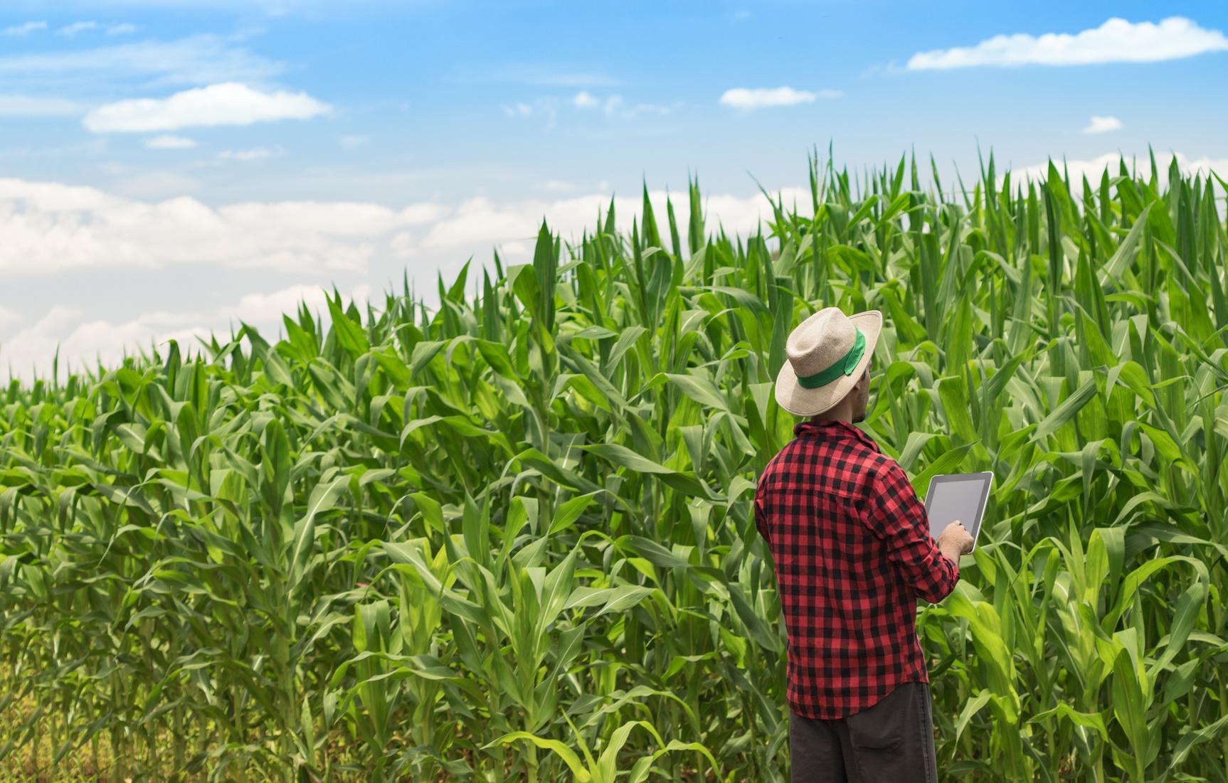 Le numérique envahit l'agriculture