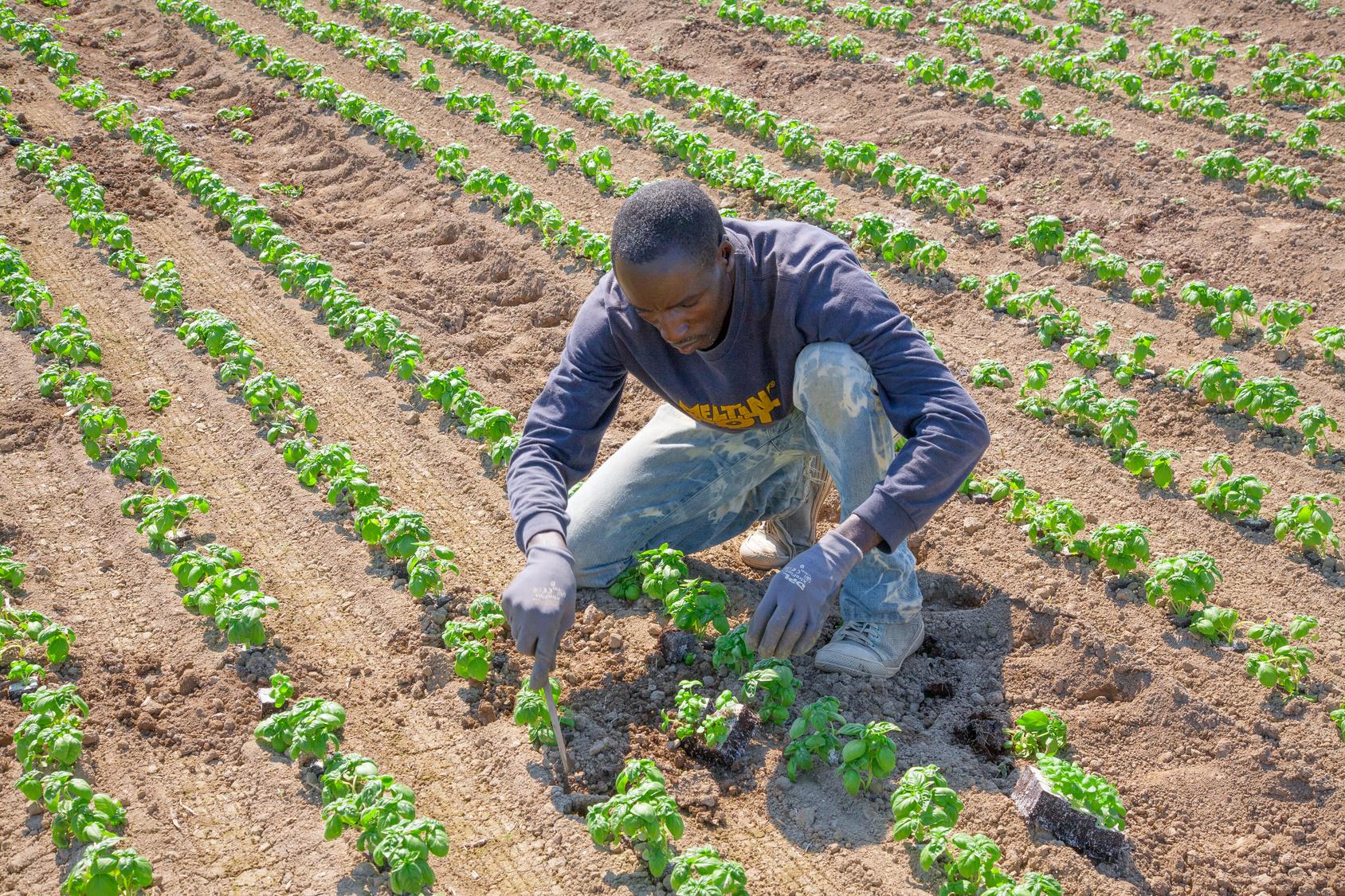 Agriculture durable pour lutter contre le chômage des jeunes en Afrique