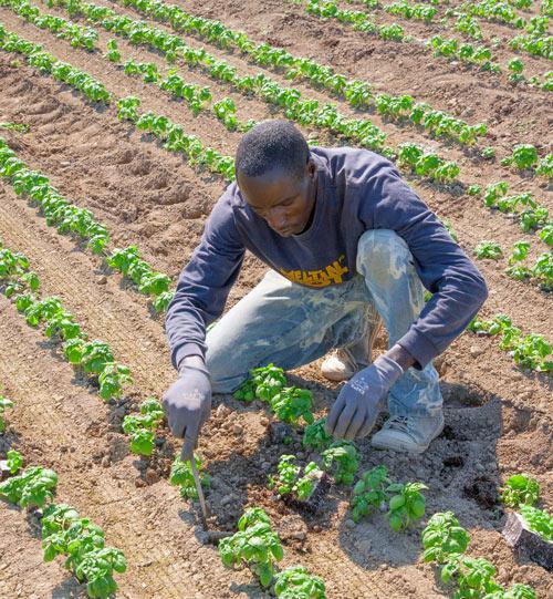 Une agriculture durable pour lutter contre le chômage des jeunes en Afrique