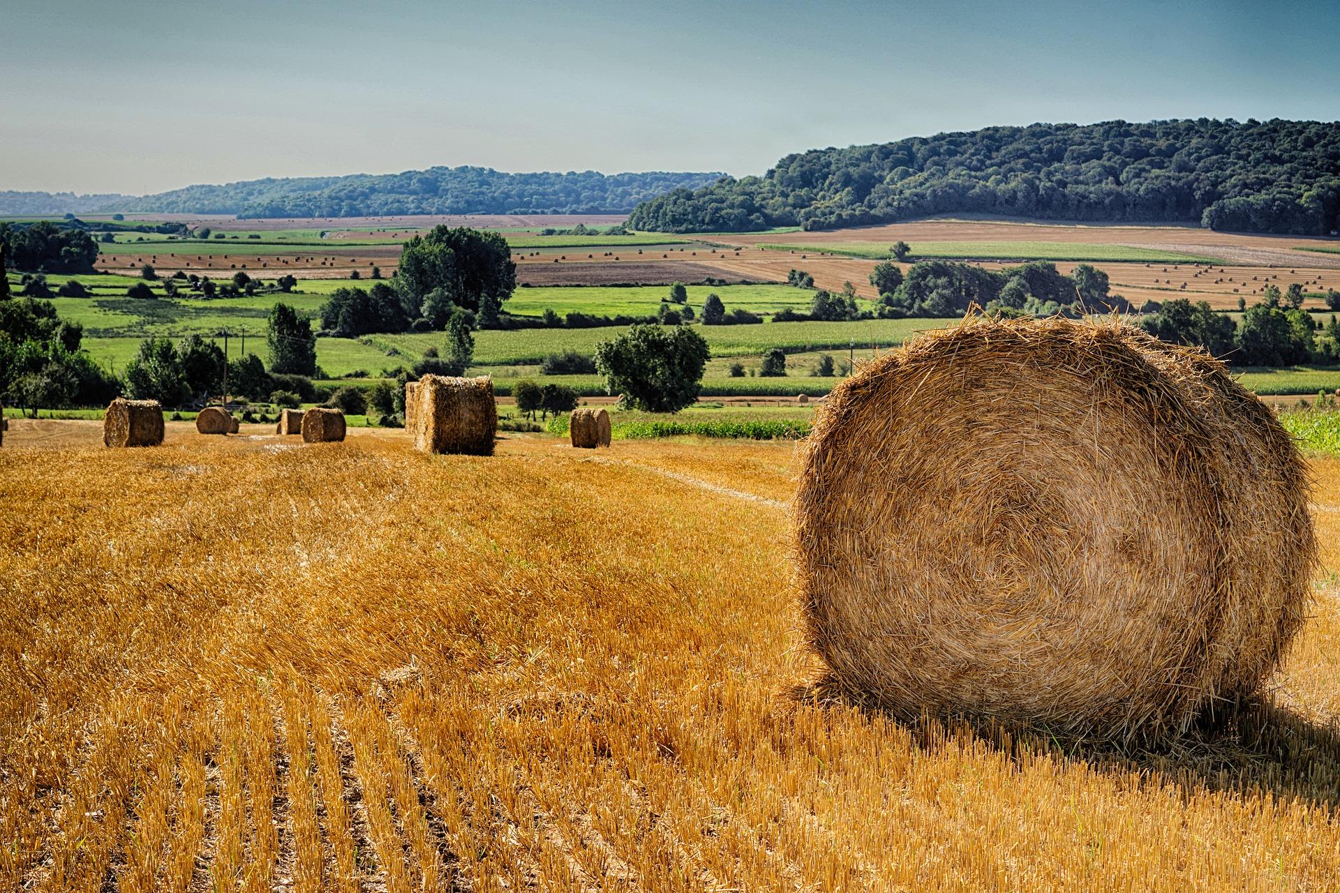 BHP s'intéresse aux fertilisants