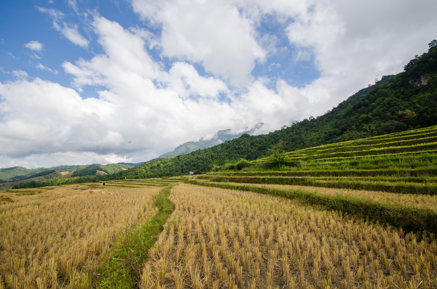 Changement climatique en Asie