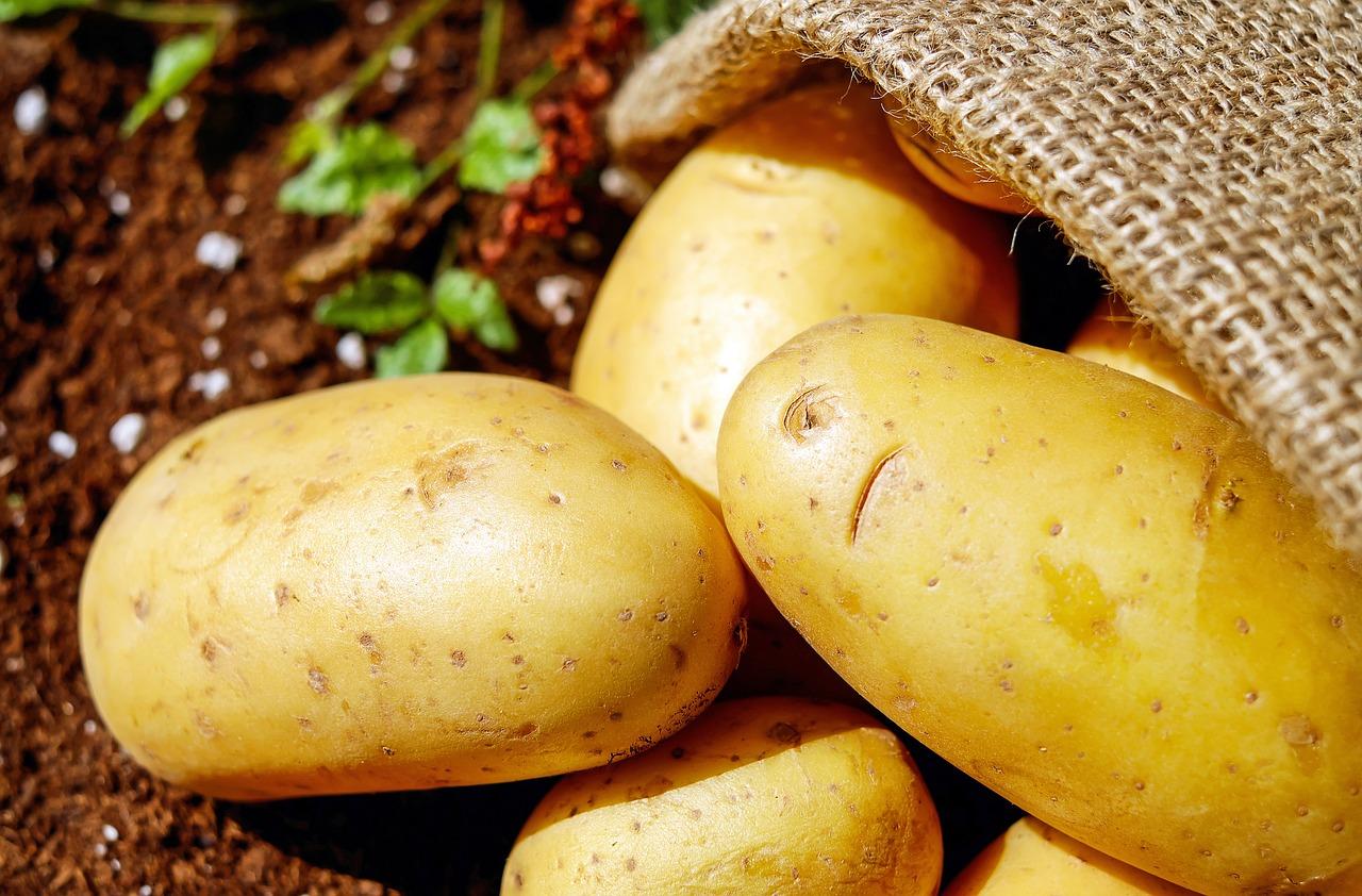 Le changement climatique menace la pomme de terre en Europe