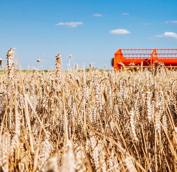 Enjeux agricoles : rendez-vous est donné aux états généraux de l'alimentation