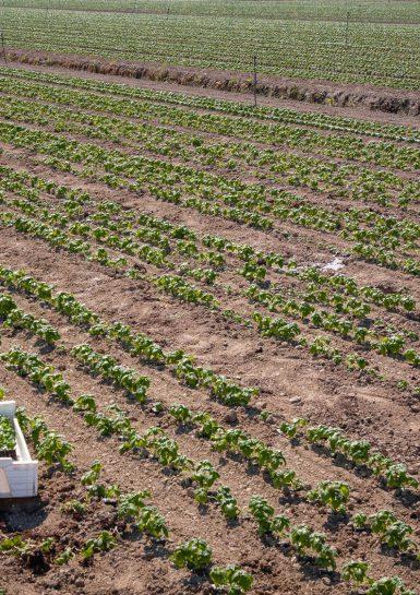 Vers un ralentissement prononcé de la demande mondiale de produits agricoles