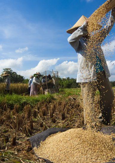 Recul de l'agriculture familiale