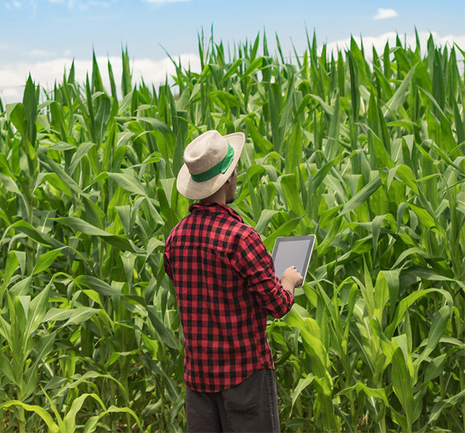 Apports des NTIC à l'organisation de filières agricoles ...